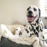 Waar je op let bij het kopen van een hondenmand